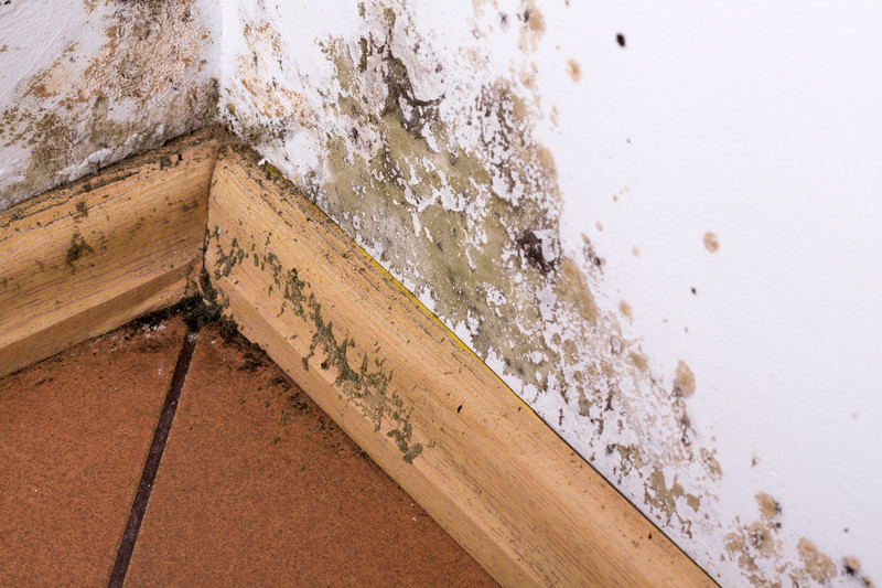 Basics of Professional Mold Damage Restoration