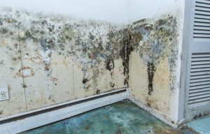Top Causes of Mold Damage in Pinellas, Florida