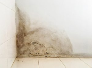 How to Prevent Mold From Water Damage in Your Home in Jacksonville, Florida