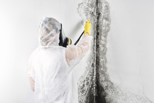 Top Dangers of Mold Exposure