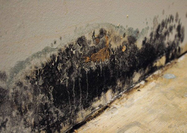 Health Risks of Mold Spores