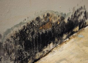 What Are The Symptoms Of Mold Exposure?