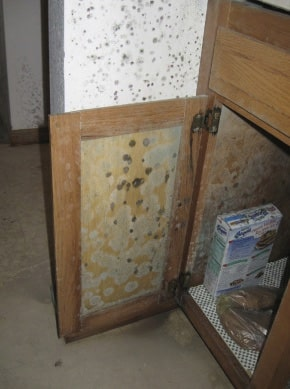 Aspergillus Mold Damage