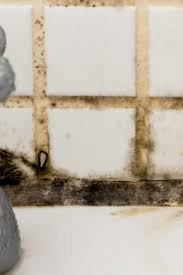 Cladosporium Mold Damage