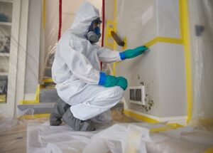 6 Common Types of Mold in Your Home